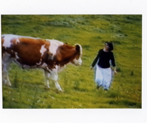 12) Cows, 1996, Dartington, shinkansen and Forum Danca